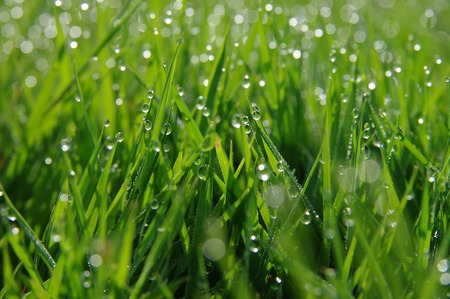 grass plot: Dew on a grass