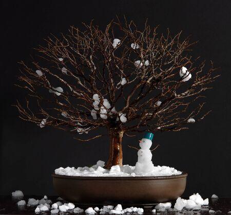 bonsai tree: Elm bonsai tree with snowman Stock Photo