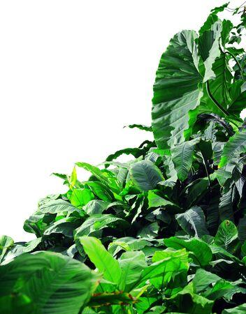 白い背景のジャングル 写真素材