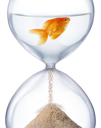 砂時計の水族館。それは時間や生活の変化の儚さを象徴しています。