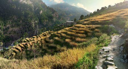 ネパールの麓の田んぼ