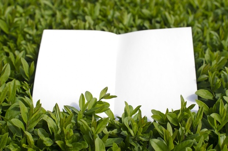 grass  plan: White paper like reminder in green grass.