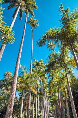 janeiro: Rio de Janeiro botanical garden