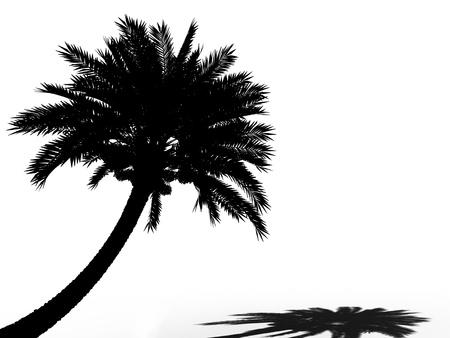 date tree: palm tree silhouette 3d cg Stock Photo