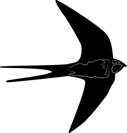 swallow outline silhouette Vector