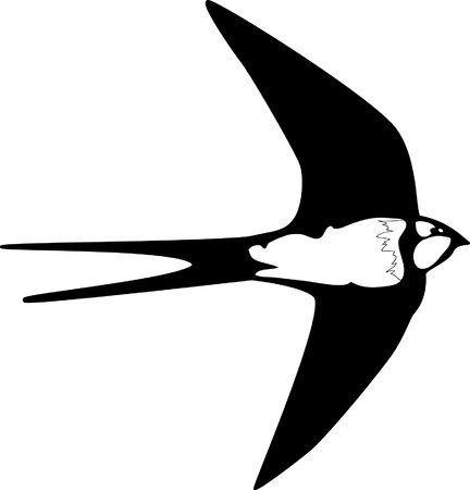 swallow fly outline silhouette Vector