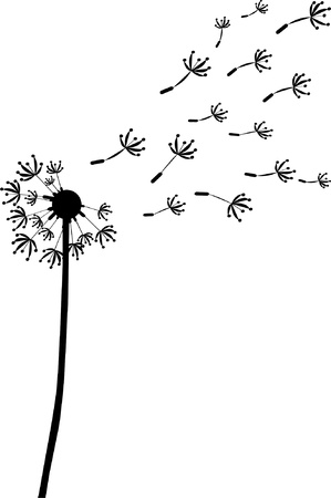 dandelion flower: dandelion illustration