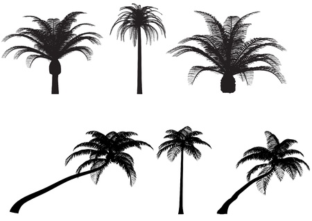 palms tree canary coconut vector pack Illustration