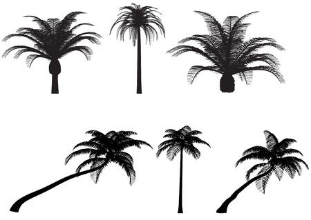 palms tree canary coconut vector pack Ilustração