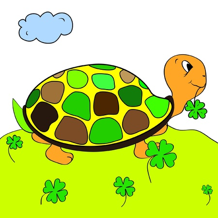 color page tortoise turtle Vector
