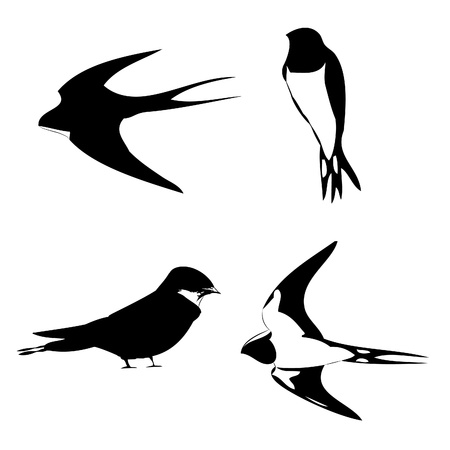 alight: swallow vector outline silhouette