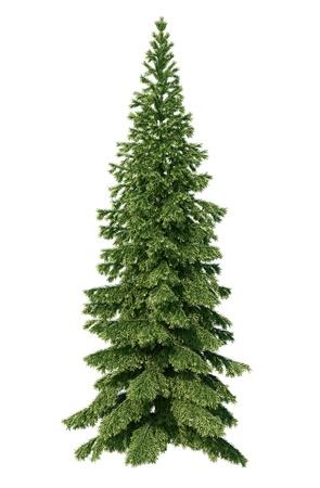 alpha: fir tree