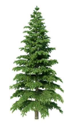 alpha: fir tree