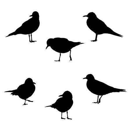 cormorant: Sea-gulls in poses vector illustration