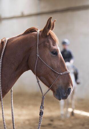 Horse with jockey on manege photo