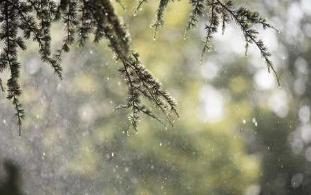 droop: Rain in summer day with bokeh effect Stock Photo