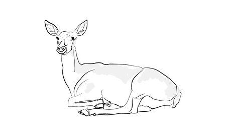 Lying deer vector illustration