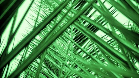 Abstract green palm leaf wallpaper