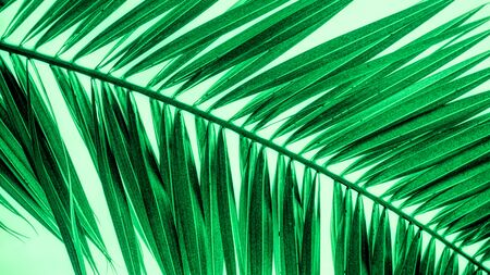 Abstract green palm leaf wallpaper Stock fotó