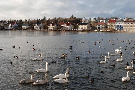 reykjavik: Invierno en el lago Tj�rnin en Reykjavik, Islandia
