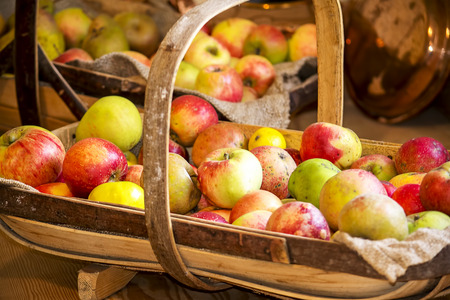 freshly picked: Freshly picked apples in a traditional wooden basket.