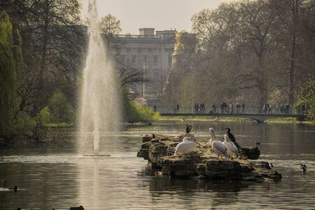 buckingham: Lake and garden of Buckingham palace in central London.