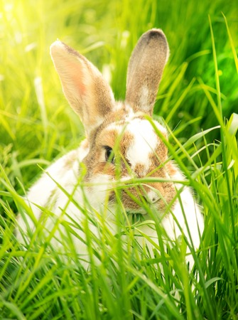 Cute rabbit in the grass Standard-Bild - 104725332