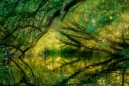 Tree tunnel on a calm river with reflection
