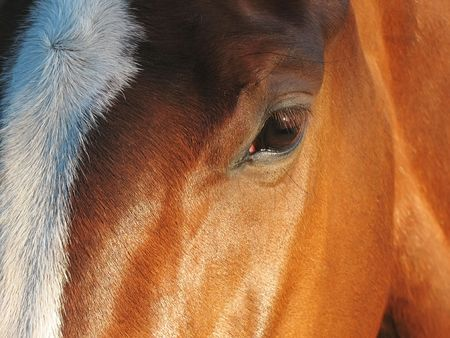 farmlife: Horse portrait