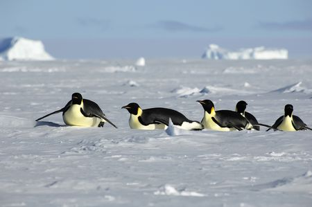 Penguin procession in Antarctica