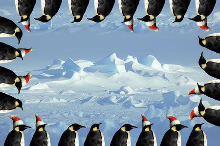 emperor: Penguin christmas card with ice Stock Photo