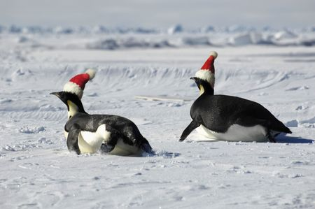 Antarctic penguin couple at Christmas day Stock Photo - 3507374