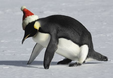Penguin training for Christmas