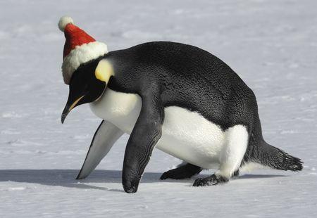 arctic: Penguin training for Christmas