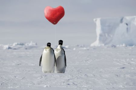 True penguin love in Antarctica photo