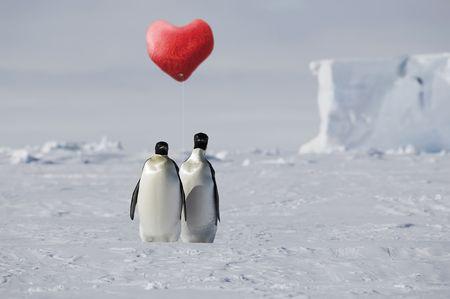 emperor: True penguin love in Antarctica