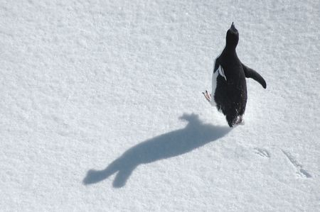 winter escape: Running Adelie penguin with shadow on snowfield Stock Photo