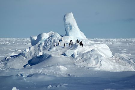 Adelie penguin group in Antarctica
