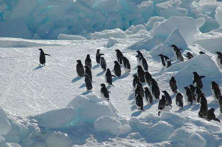 followers: Antarctic adelie penguin swarm Stock Photo