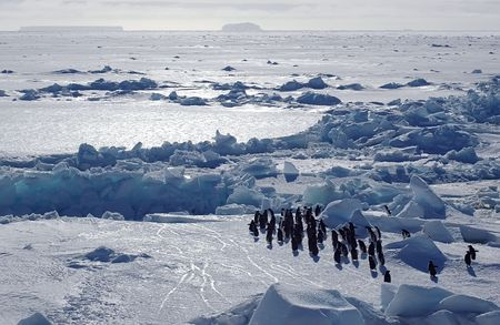 Adelie penguins with Antarctic pack ice scenery Stock Photo - 5809690