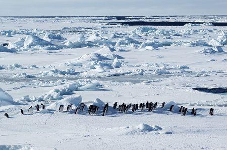 Antarctic adelie penguins photo