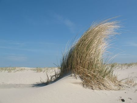Dune grass on a sandy beach under a blue sky