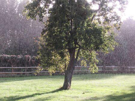 Regen fällt auf einen Garten, Somerset, UK Standard-Bild