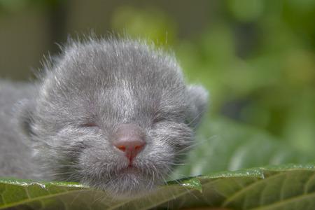 animalitos tiernos: Gatito en una hoja