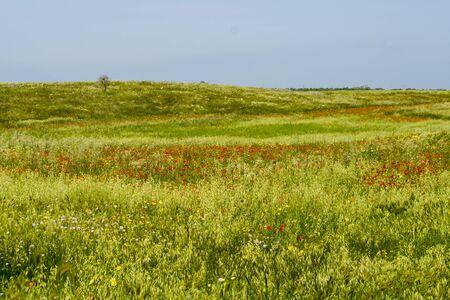 flowery: Spring: flowery meadow