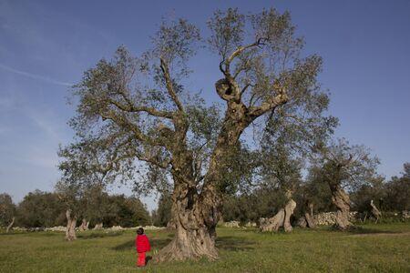 large tree: Child looks big tree Stock Photo