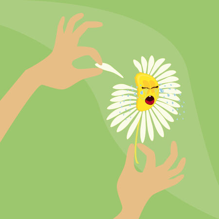 plucking: Camomile  Hands plucking off the petals of a white flower  Stock Photo