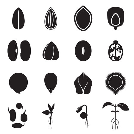Conjunto de iconos de la semilla, que representa los tipos más comunes de semillas de cultivos como los frijoles, trigo sarraceno, trigo, girasol, calabaza, de ricino, soja, etc y la germinación de las semillas y brotes. ilustración vectorial