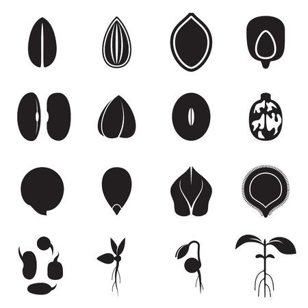semilla: Conjunto de iconos de la semilla, que representa los tipos más comunes de semillas de cultivos como los frijoles, trigo sarraceno, trigo, girasol, calabaza, de ricino, soja, etc y la germinación de las semillas y brotes. ilustración vectorial