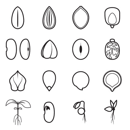 pumpkin seeds: Seed icon set, which represents the most common types of crop seeds such as beans, buckwheat, wheat, sunflower, pumpkin, castor, soy, etc. Vector illustration